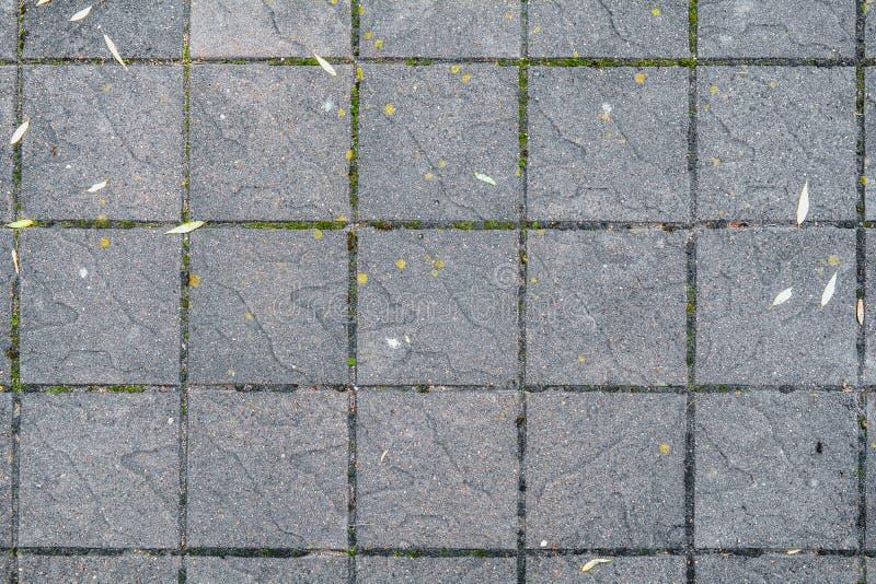 Το συγκεκριμένο πεζοδρόμιο στο κοινό προετοιμάζω το έδαφος Μεγάλα τετραγωνικά κεραμίδια Αστικός στρώστε με το βρύο στοκ φωτογραφία