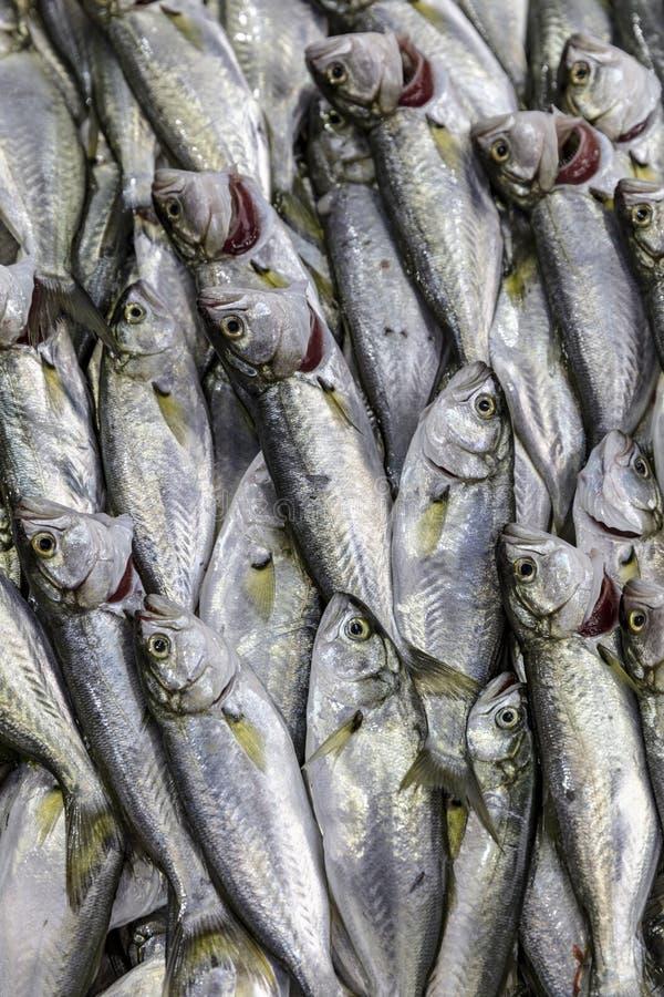 Το σχέδιο έκανε με bluefish τα θαλασσινά της Μεσογείου στην αγορά ψαριών στοκ εικόνες με δικαίωμα ελεύθερης χρήσης