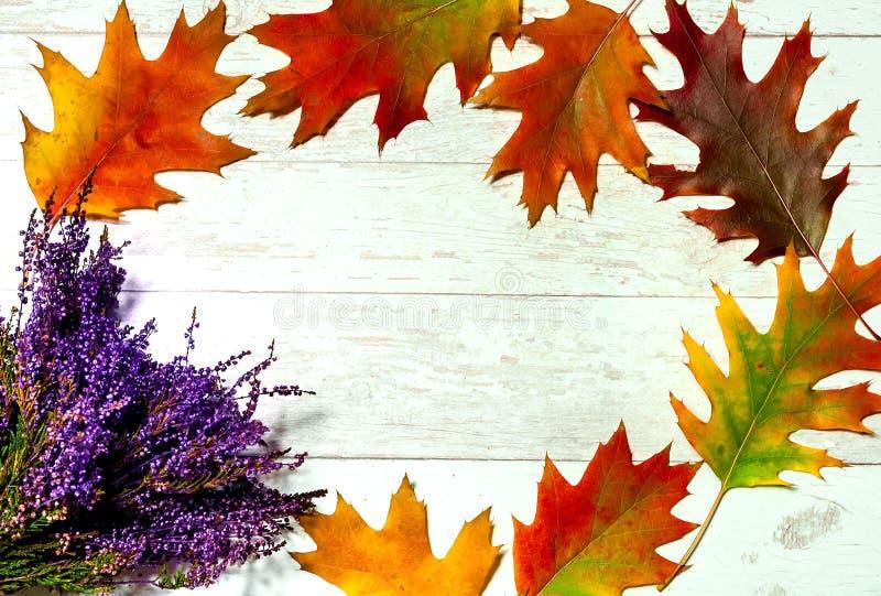 Το σχέδιο φθινοπώρου, στρογγυλό πλαίσιο των φυσικών πορτοκαλιών φύλλων με την ερείκη ανθίζει στο λευκό πίνακα Επίπεδος βάλτε, κλε στοκ φωτογραφία με δικαίωμα ελεύθερης χρήσης