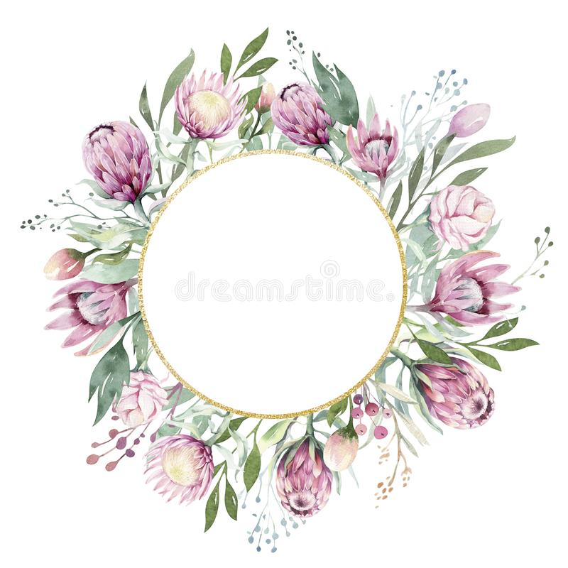 Το σχέδιο χεριών απομόνωσε το watercolor που το floral πλαίσιο με το protea αυξήθηκε, φύλλα, κλάδοι και λουλούδια Βοημίας χρυσό κ απεικόνιση αποθεμάτων