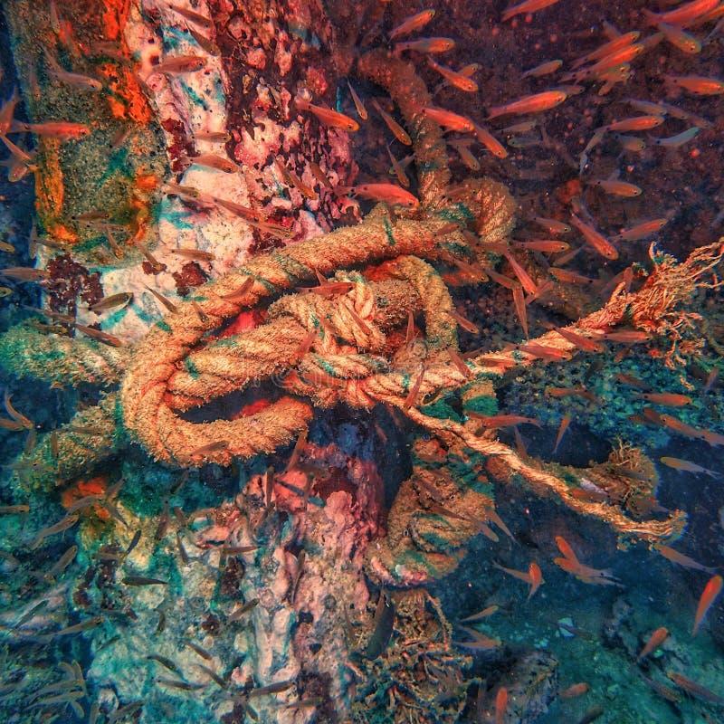 το σχοινί δένει στον καλάμι πάνω από το ναυάγιο  και η βαθιά γαλάζια κατάδυση στοκ φωτογραφία