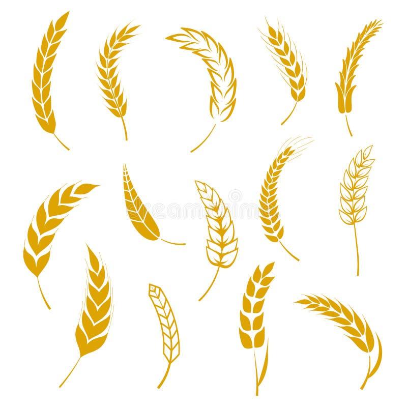 Το σύνολο απλών εικονιδίων αυτιών σίτων και στοιχείων σχεδίου σιταριού για την μπύρα, οργανικά τοπικά αγροτικά φρέσκα τρόφιμα σίτ διανυσματική απεικόνιση