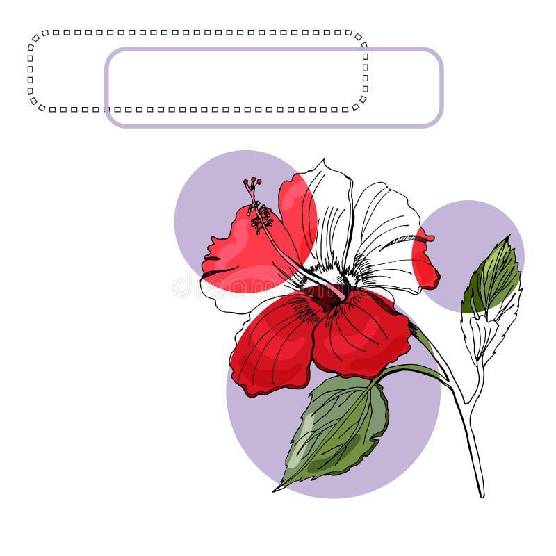 Το σύνολο με μονοχρωματικό, χρωματισμένος hibiscus ανθίζει, ιώδεις κύκλοι και πλαίσια r ελεύθερη απεικόνιση δικαιώματος