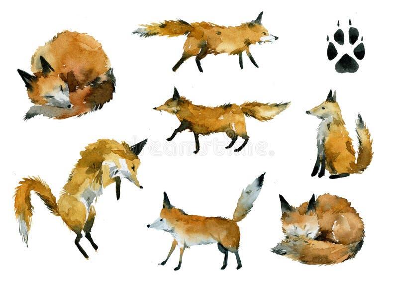 Το σύνολο χνουδωτών αλεπούδων σε διάφορο θέτει απεικόνιση αποθεμάτων