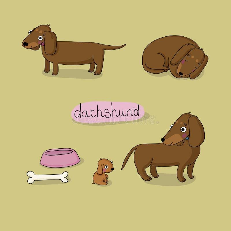 Το σύνολο χαριτωμένης απεικόνισης dachshund σε διαφορετικό θέτει απεικόνιση αποθεμάτων