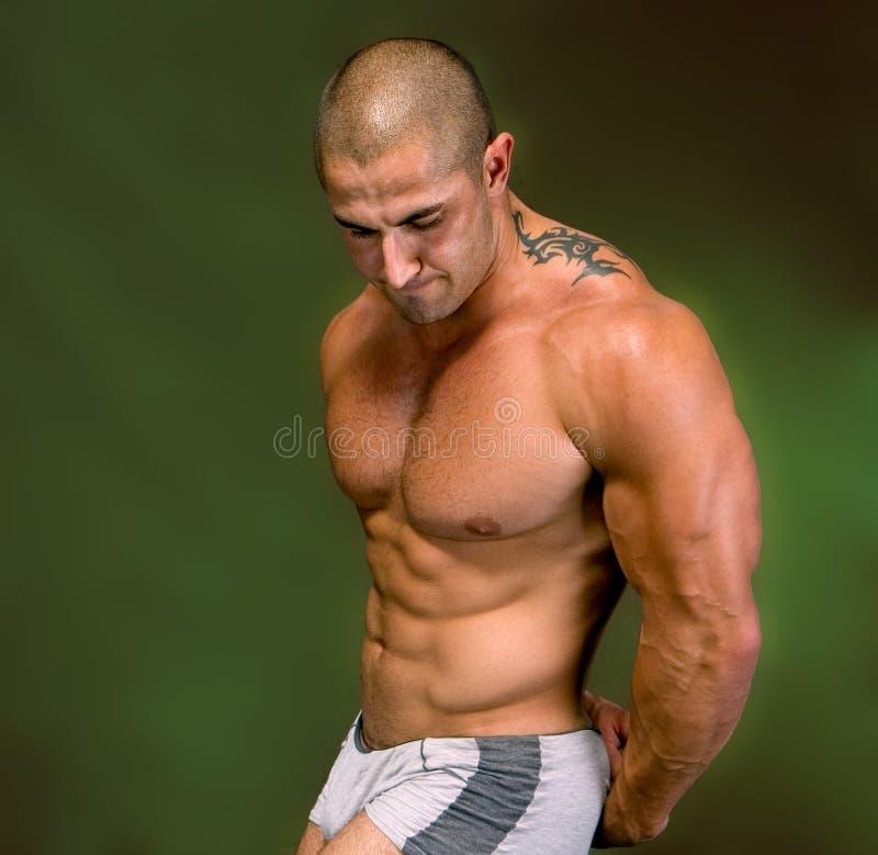 Το τέλειο αρσενικό σώμα στοκ εικόνες