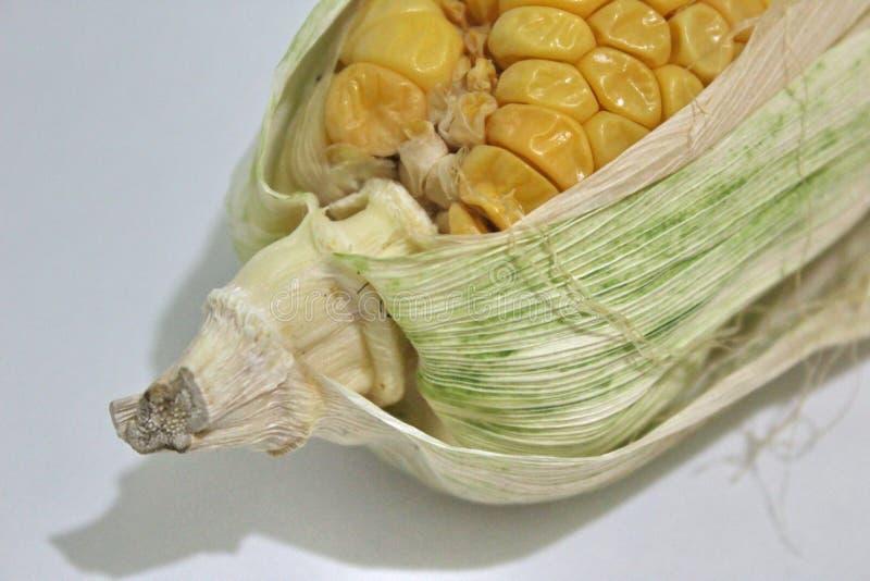 Το τελευταίο μέρος των σπαδίκων καλαμποκιού με τα φύλλα καλαμποκιού στοκ φωτογραφία