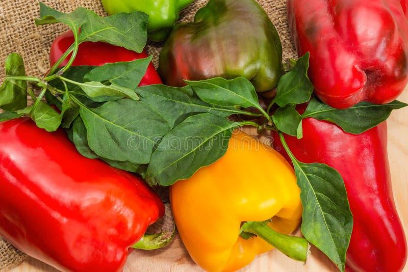 Το τεμάχιο τα πιπέρια κουδουνιών με τα φύλλα sackcloth στοκ φωτογραφία με δικαίωμα ελεύθερης χρήσης