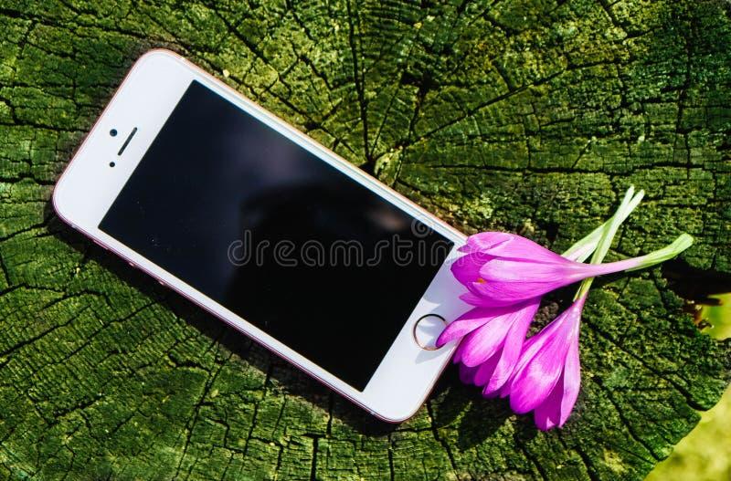 Το τηλέφωνο στο φυσικό περιβάλλον, χλευάζει επάνω με το ιώδες FI ανθών στοκ εικόνες