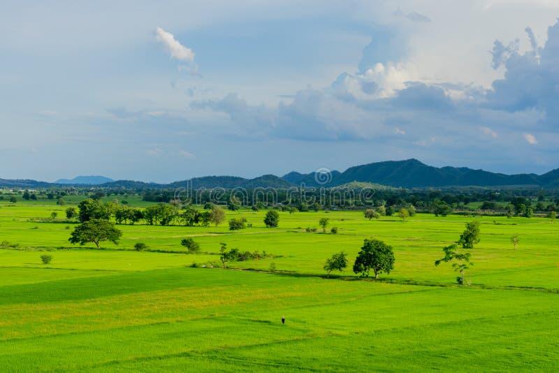 Το τοπίο του τομέα ρυζιού προτού να βρέξει στοκ εικόνες