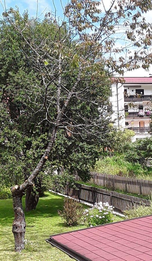 Το τρελλό μονόπλευρο δέντρο στοκ εικόνα