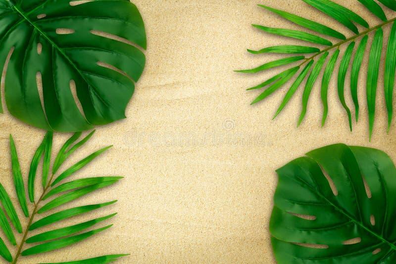 Το τροπικό πράσινο monstera βγάζει φύλλα και φοινικών σύνορα πλαισίων φύλλων στην άμμο παραλιών Σχέδιο για τη θερινή διακόσμησή σ στοκ εικόνα με δικαίωμα ελεύθερης χρήσης