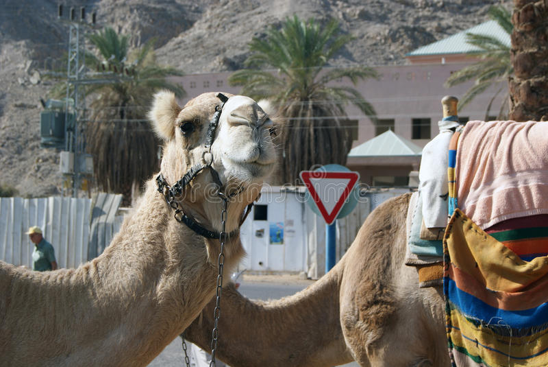 Το τροχόσπιτο της ερήμου στοκ φωτογραφίες με δικαίωμα ελεύθερης χρήσης