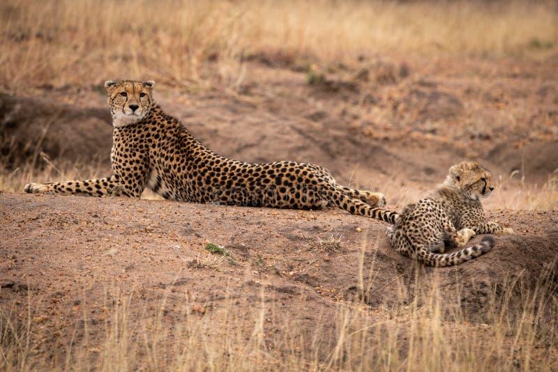 Το τσιτάχ βρίσκεται εκτός από cub στο γήινο ανάχωμα στοκ φωτογραφία με δικαίωμα ελεύθερης χρήσης