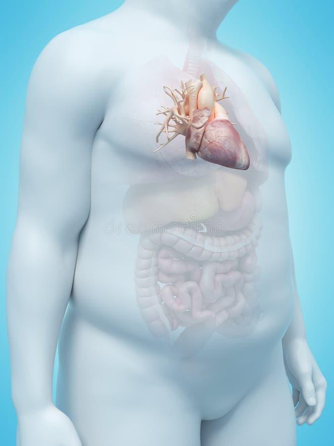 Το υπερβολικό βάρος επανδρώνει την καρδιά απεικόνιση αποθεμάτων