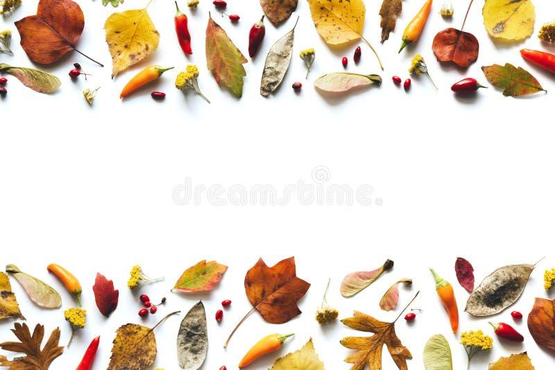 Το υπόβαθρο φθινοπώρου με τα ζωηρόχρωμα φύλλα, τα πιπέρια τσίλι και το κόκκινο είναι στοκ εικόνες