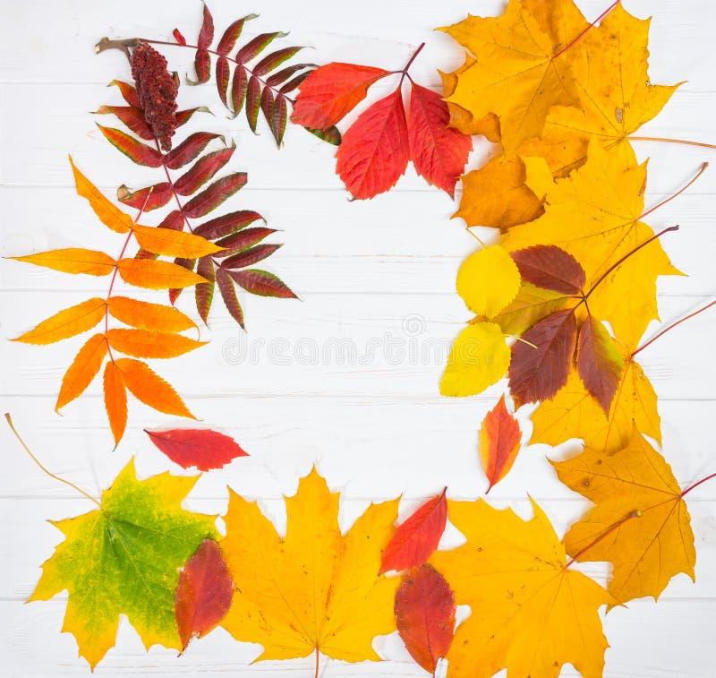 Το υπόβαθρο φθινοπώρου με τα κίτρινα, κόκκινα και πράσινα φύλλα στο λευκό επιζητά στοκ εικόνα με δικαίωμα ελεύθερης χρήσης