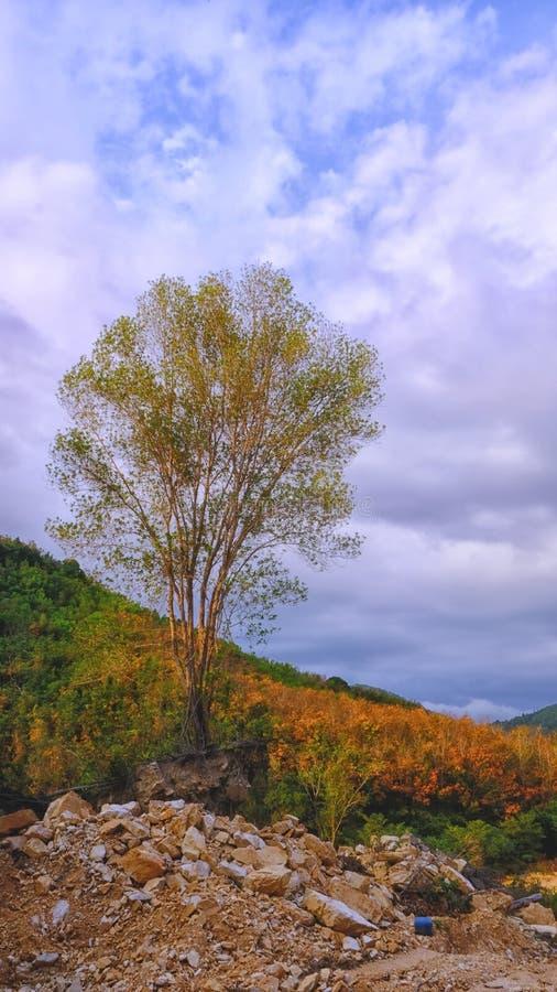 Το υπόλοιπο δέντρο στοκ φωτογραφίες με δικαίωμα ελεύθερης χρήσης