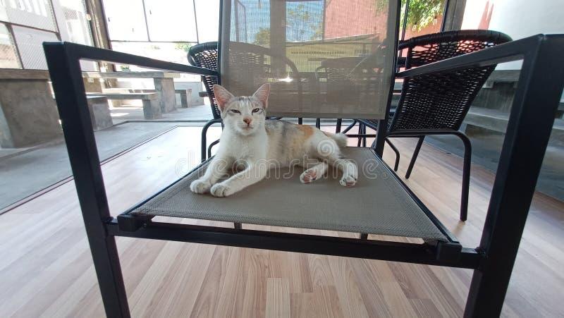 Το υπόλοιπο και χαλαρώνει της χαριτωμένης γάτας στοκ φωτογραφία με δικαίωμα ελεύθερης χρήσης