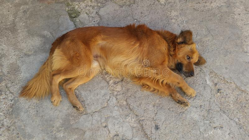 Το υπόλοιπο του σκυλιού μου στοκ εικόνα με δικαίωμα ελεύθερης χρήσης