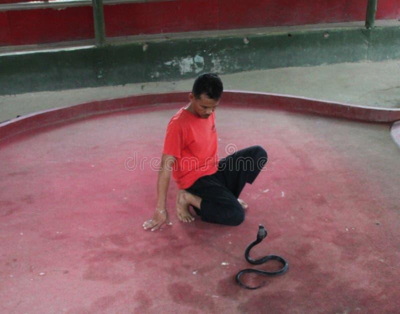Το φίδι παρουσιάζει στοκ εικόνες με δικαίωμα ελεύθερης χρήσης