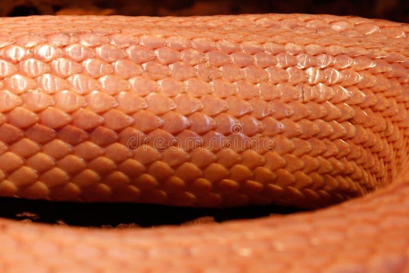 Το φίδι χλόης - Ringelnatter στοκ φωτογραφίες με δικαίωμα ελεύθερης χρήσης