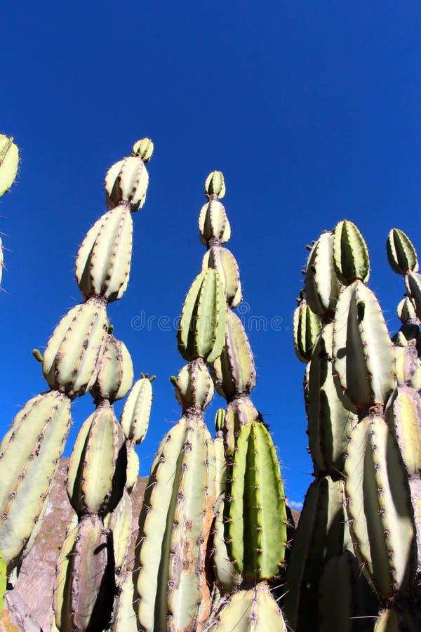 Το φαράγγι Colca στοκ φωτογραφίες