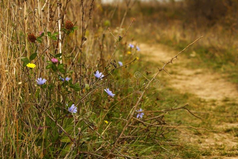 το φθινόπωρο ανθίζει τις άγρια περιοχές στοκ φωτογραφίες