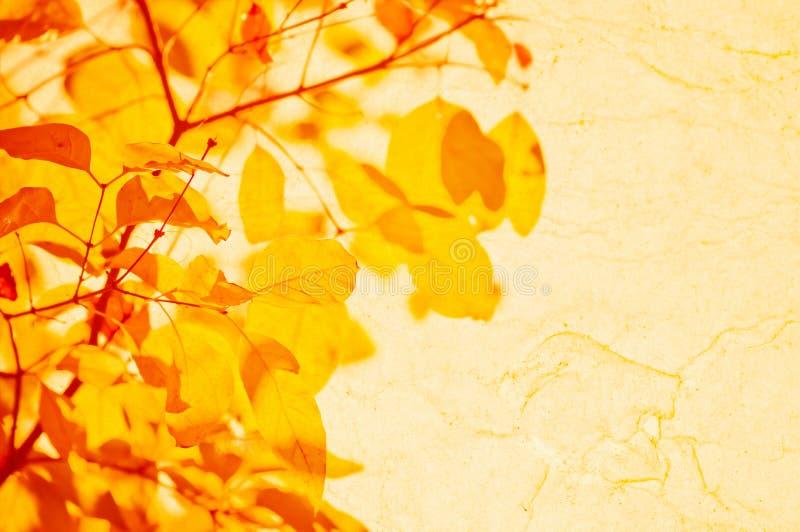 το φθινόπωρο αφήνει κίτρινος στοκ εικόνα