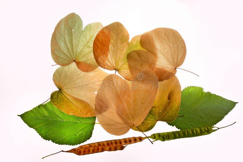 Το φθινόπωρο αφήνει πράσινο κίτρινο nostalgy στοκ εικόνες