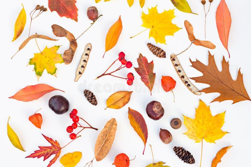 Το φθινόπωρο αφήνει το σύνολο έννοιας σφενδάμνου ακακιών physalia σορβιών βελανιδιών κάστανων σπόρων φυτών φρούτων φύλλων φύλλων στοκ φωτογραφία με δικαίωμα ελεύθερης χρήσης
