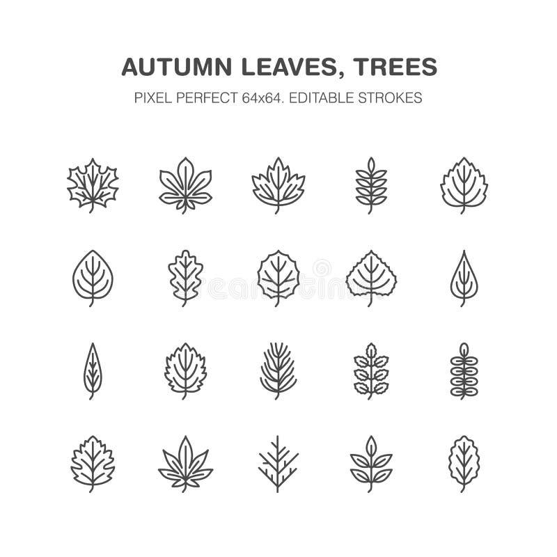 Το φθινόπωρο αφήνει τα επίπεδα εικονίδια γραμμών Οι τύποι φύλλων, σορβιά, δέντρο σημύδων, σφένδαμνος, κάστανο, βαλανιδιά, πεύκο κ διανυσματική απεικόνιση