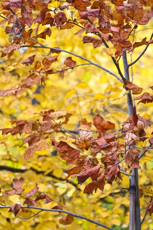 το φθινόπωρο αφήνει την επ&omic στοκ εικόνες