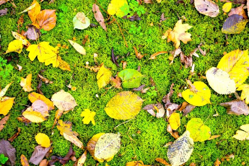 Το φθινόπωρο αφήνει το φυσικό υπόβαθρο Ζωηρόχρωμο φύλλωμα στο πράσινο βρύο στοκ εικόνα με δικαίωμα ελεύθερης χρήσης