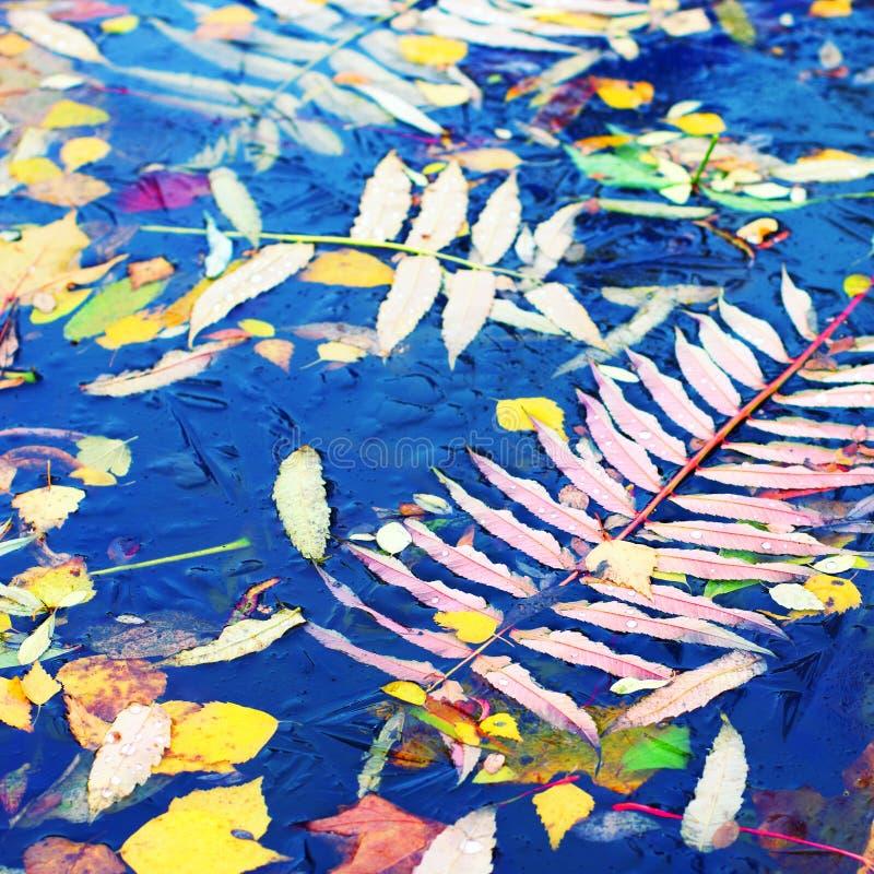 το φθινόπωρο αφήνει το ύδω&rh στοκ φωτογραφίες