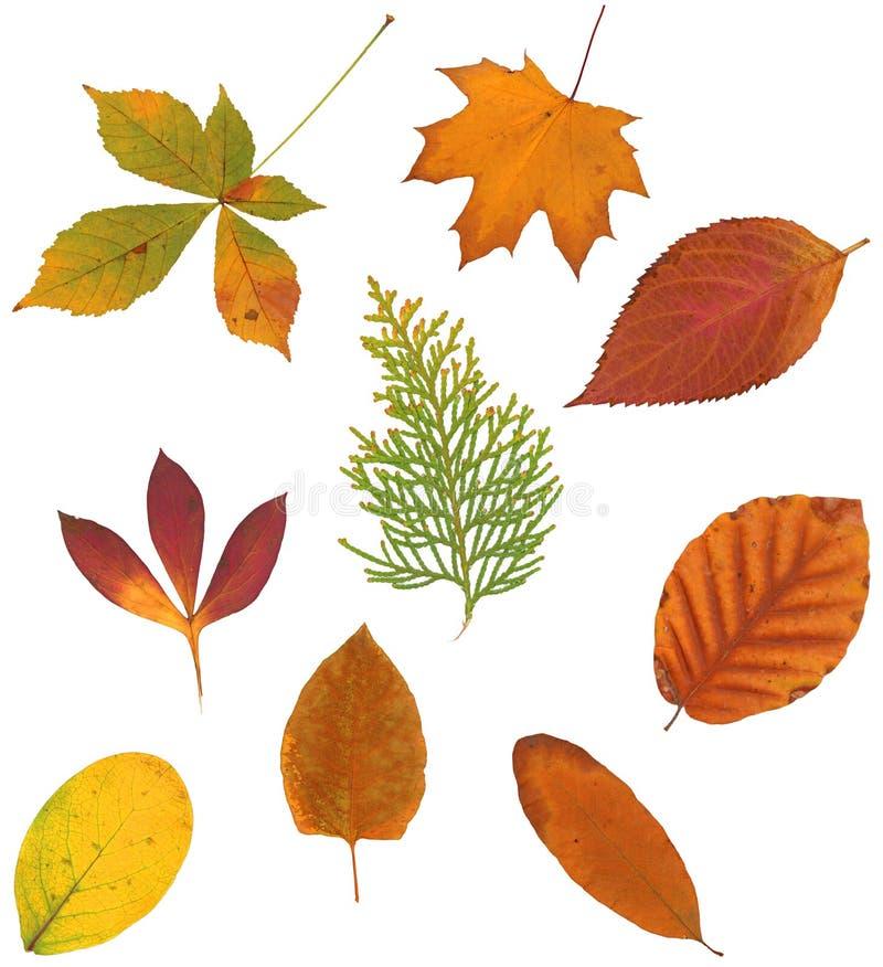 το φθινόπωρο βγάζει φύλλα στοκ εικόνα με δικαίωμα ελεύθερης χρήσης