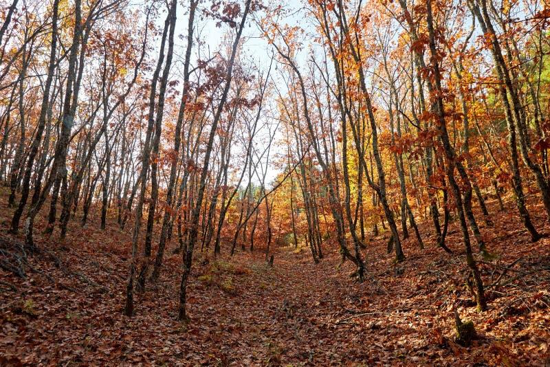 το φθινόπωρο κάλυψε τα πεσμένα δασικά φύλλα επίγειων τοπίων κίτρινα Φωτεινά χρωματισμένα δρύινα φύλλα στον κλάδο στοκ εικόνα