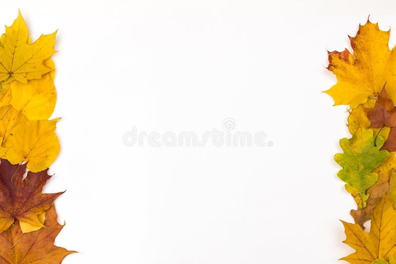 το φθινόπωρο περιέχει το μονοπάτι φύλλων πλαισίων αρχείων στοκ φωτογραφίες με δικαίωμα ελεύθερης χρήσης