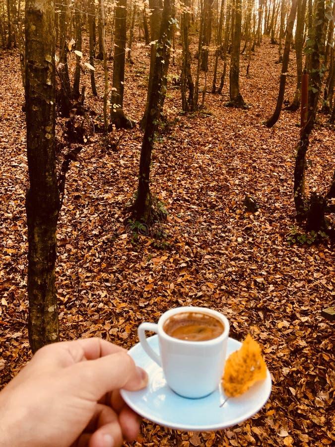 το φθινόπωρο του τουρκικού καφέ στοκ εικόνα με δικαίωμα ελεύθερης χρήσης