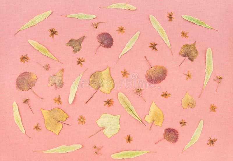 Το φθινόπωρο φεύγει και ανθίζει στο ρόδινο υπόβαθρο κρητιδογραφιών στοκ φωτογραφίες με δικαίωμα ελεύθερης χρήσης