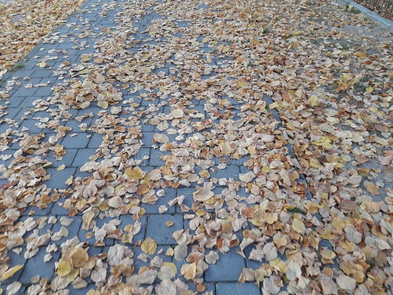 Το φθινόπωρο φεύγει που εξωραΐζει τις οδούς Storkow στοκ εικόνες με δικαίωμα ελεύθερης χρήσης