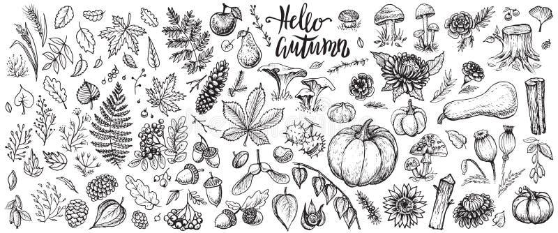 Το φθινόπωρο φυτεύει τα διανυσματικά σκίτσα Συρμένο χέρι σύνολο συγκομιδής, φύλλων και εποχιακών λουλουδιών πτώσης απεικόνιση αποθεμάτων