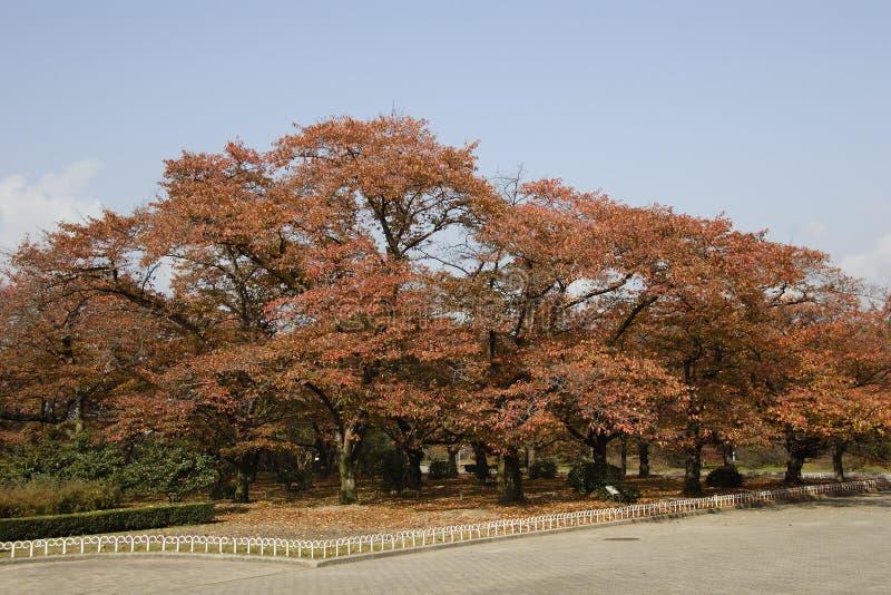 το φθινόπωρο χρωμάτισε τα φύλλα στοκ εικόνες