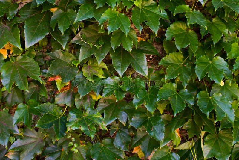 το φθινόπωρο χρωματίζει την άνευ ραφής σύσταση προτύπων φύλλων στοκ φωτογραφία