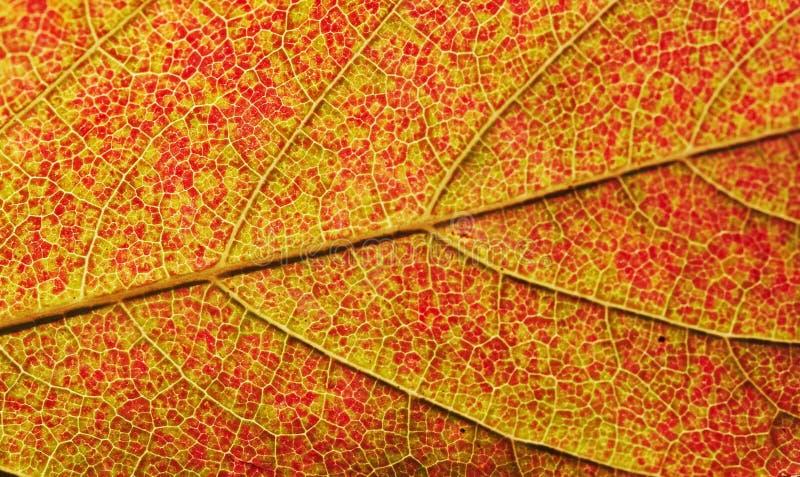 το φθινόπωρο χρωματίζει την άνευ ραφής σύσταση προτύπων φύλλων στοκ εικόνες