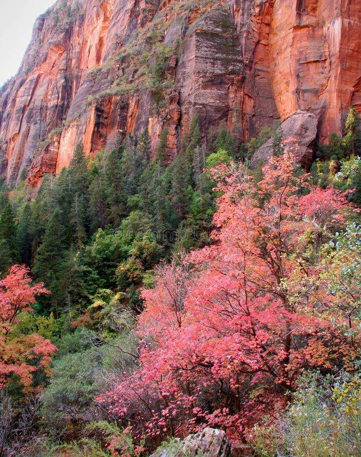 το φθινόπωρο χρωματίζει zions στοκ εικόνα