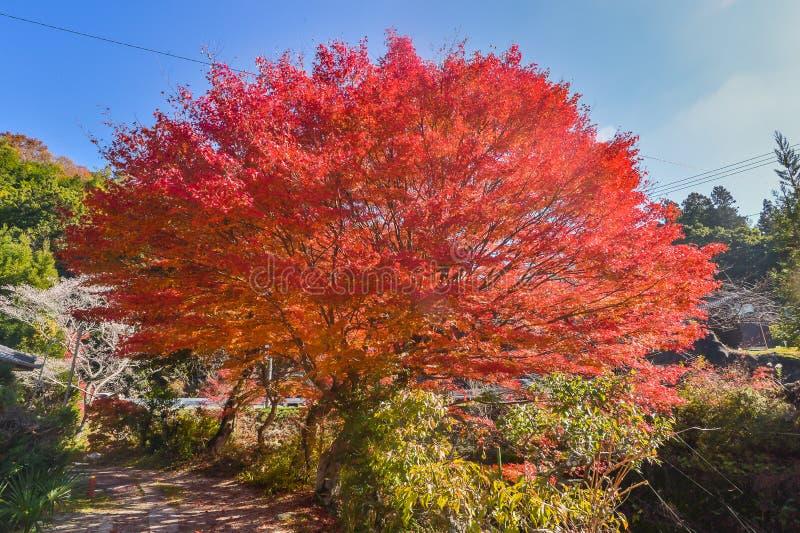 Το φθινόπωρο sason φέρνει τη ζωή ζωντανή στοκ φωτογραφίες