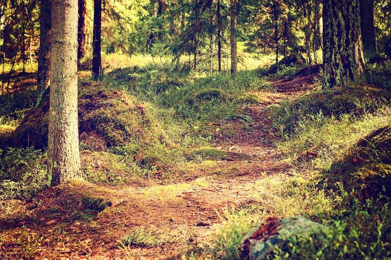 Το φινλανδικές καλοκαίρι και η φύση στα καλύτερα δάση του στη Φινλανδία είναι πάντα πράσινα και ήρεμα με τα μέρη των διαβάσεων ή  στοκ εικόνα με δικαίωμα ελεύθερης χρήσης