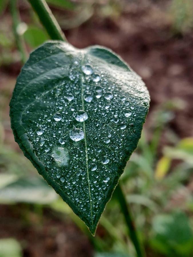 Το φρέσκο πράσινο φύλλο με τη βράζοντας δροσιά εγκαταλείπει τη στενή άποψη στοκ εικόνες