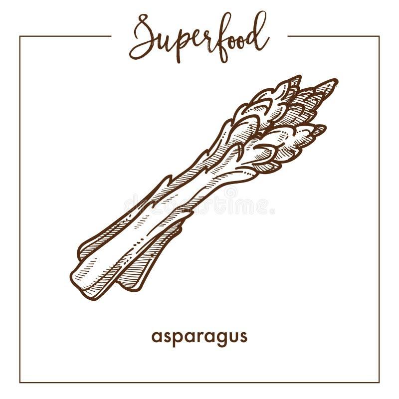 Το φρέσκο υγιές σπαράγγι διακλαδίζεται μονοχρωματικό σκίτσο σεπιών superfood διανυσματική απεικόνιση